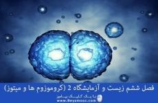 فصل ششم زیست و آزمایشگاه 2 (کروموزوم ها و میتوز)