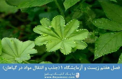 فصل هفتم زیست و آزمایشگاه 1 (جذب و انتقال مواد در گیاهان)