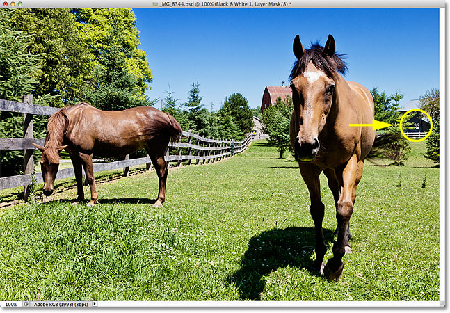 Clicking and dragging to brighten the horse. Image © 2012 Photoshop Essentials.com