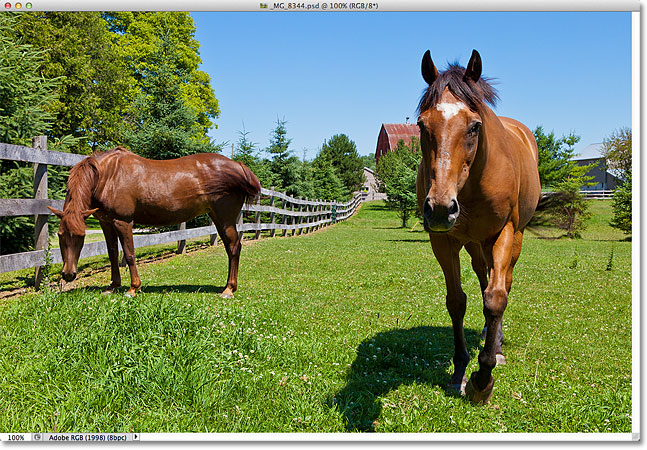 A photo of two horses on a ranch. Image © 2012 Steve Patterson.