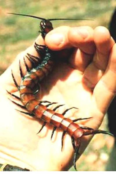 sadpa مقابله با حشرات در طبیعت