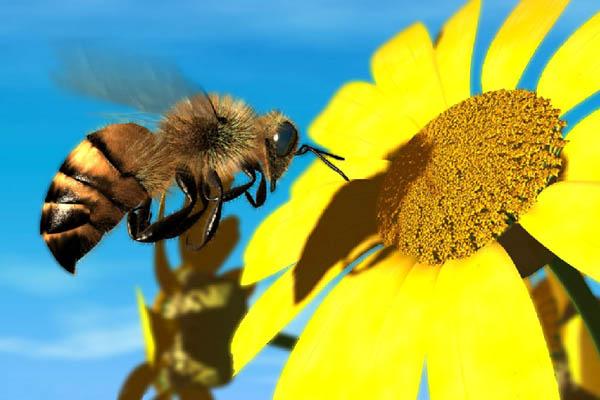 zanbur مقابله با حشرات در طبیعت